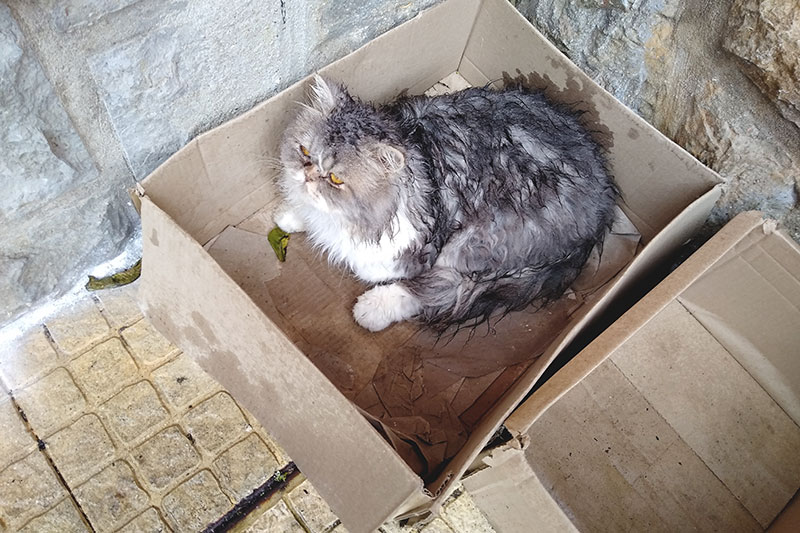 wet-cat-sitting-in-cardboard-box-outside