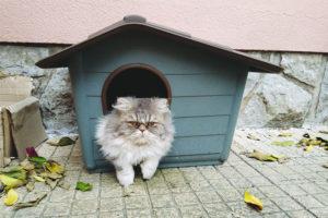 cat-sitting-in-plastic-waterproof-outdoor-cat-house