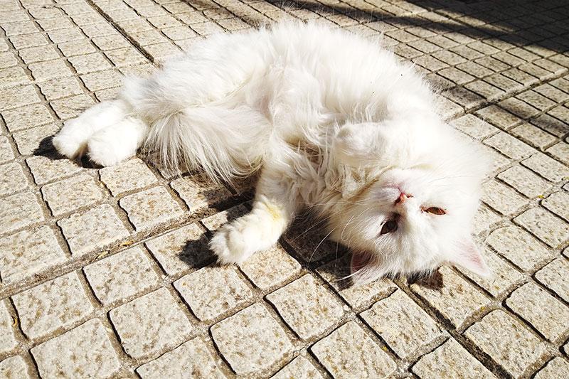 cat-lying-down-on-back-sleeping-in-sun