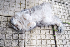 Why Do Cats Sleep on Their Backs? 11 Possible Explanations