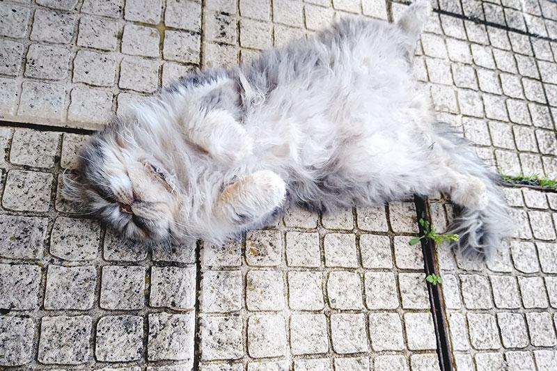 cat-sleeping-on-back-legs-open-arms-folded