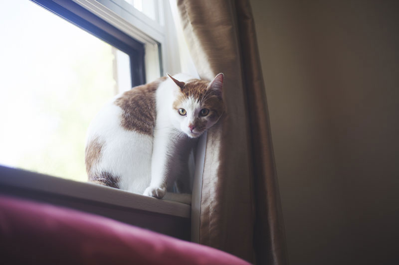 cat-sitting-sly-face-on-window-sill
