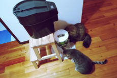 Easy Fix: How to Stop Cats from Eating Each Others' Food