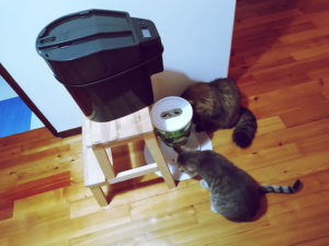 cats-sharing-food-eating-together-timed-feeder-automatic
