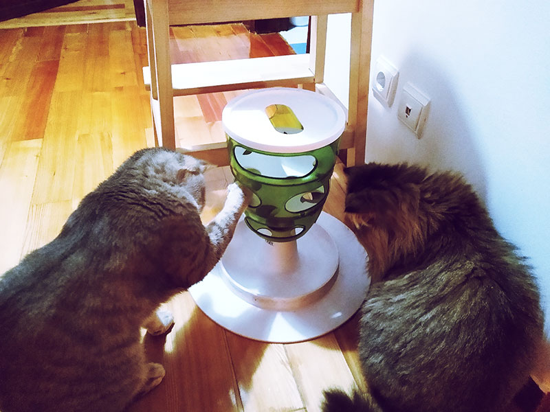 two-cats-sharing-food-cat-food-toy-and-timed-automatic-feeder
