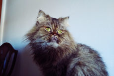 Why Does My Cat Meow When I Sneeze? 10 Possibilities