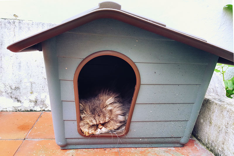 cat-snoozing-away-inside-outdoor-pet-house-sleeping-kitty