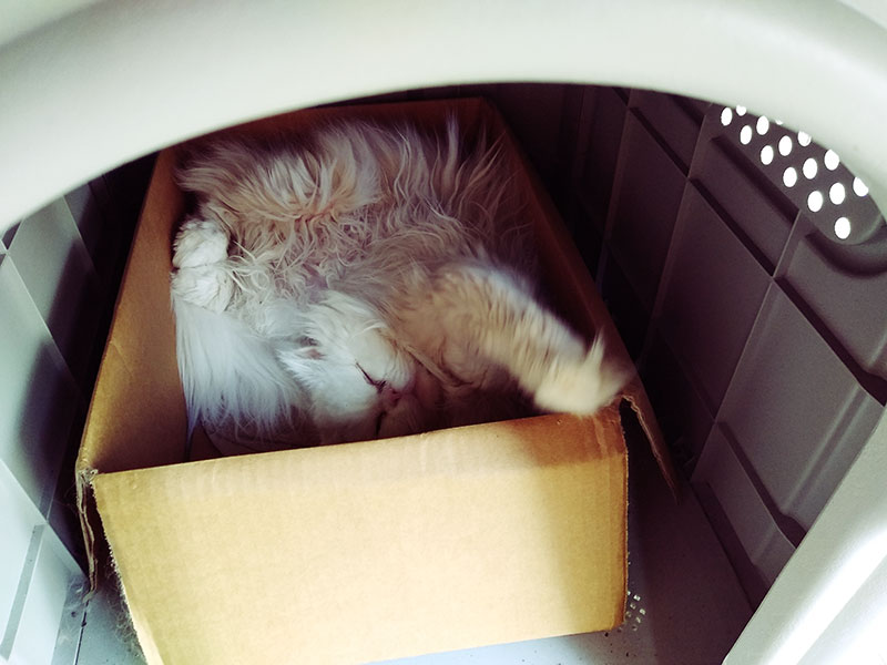 cat-stretching-sleeping-in-cardboard-box-inside-outdoor-pet-house