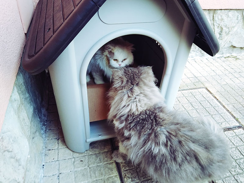 two-cats-one-inside-pet-house-one-outside-cute