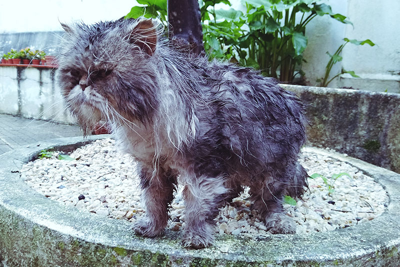 wet-cat-drenched-from-heavy-rain