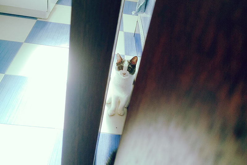 cute-little-spotted-kitten-hiding-behind-door
