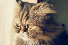 Signs That a Cat Is Dying & That It May Be Time to Say Goodbye