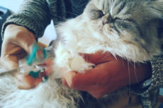 """My Cat Won't Let Me Cut Her Nails!"" Why Cats Hate Claw Trims & How To Do It"