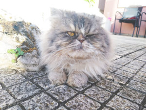 cat-winking-what-does-it-mean-why-does-my-cat-do-it